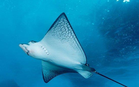 animales marinos 2