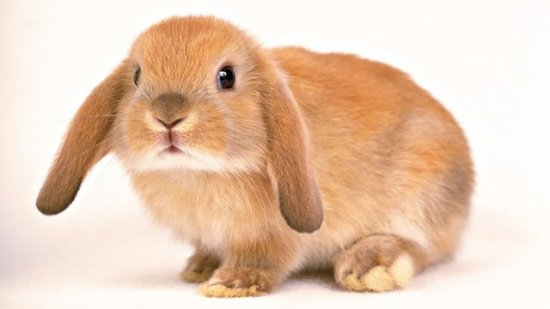 informacion sobre el conejo 2