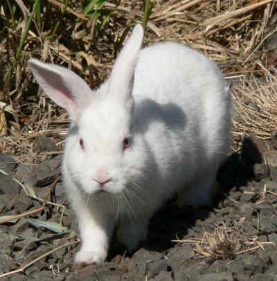informacion sobre el conejo 3