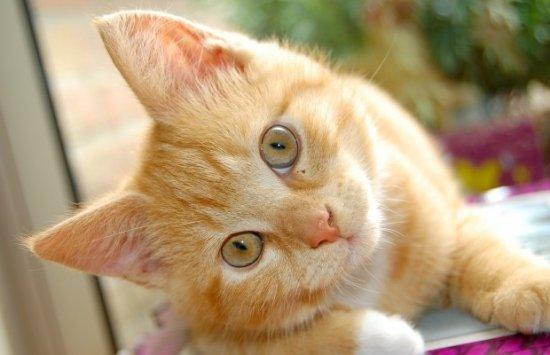 informacion sobre el gato 1