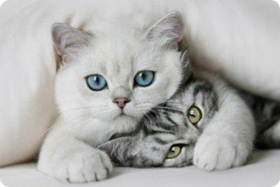 informacion sobre el gato 2