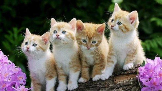 informacion sobre el gato 4