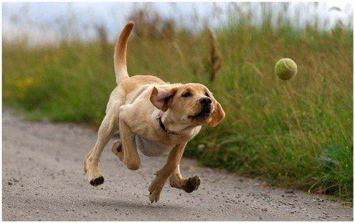 informacion sobre el perro 5