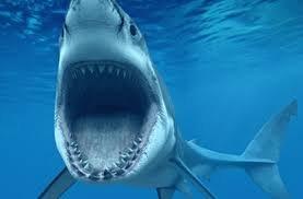 informacion sobre el tiburon blanco 2