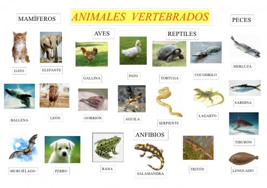 informacion sobre los animales vertebrados 1
