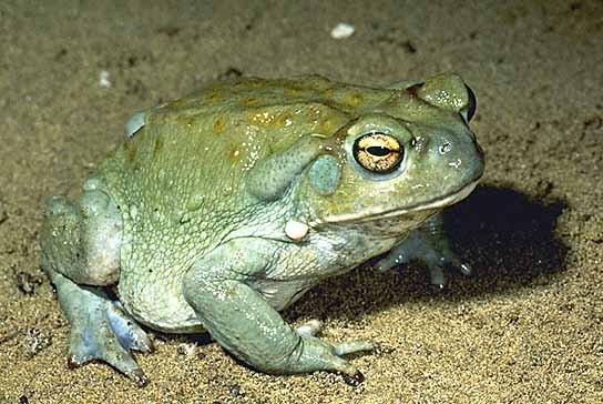 informacion sobre los animales vertebrados 6