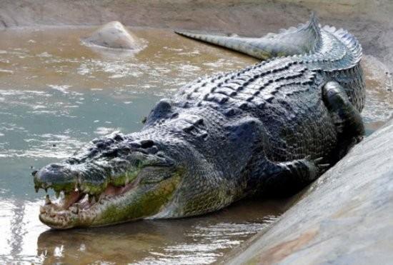 informacion sobre los animales vertebrados 8